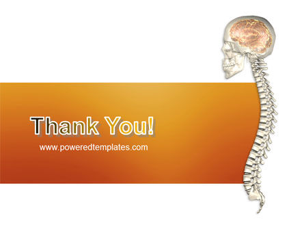 Spinal Cord PowerPoint Template Slide 20