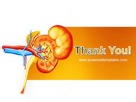 Kidneys PowerPoint Template Slide 20