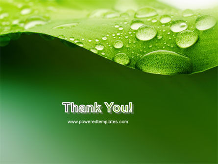 Fresh Dew On The Green Leaf PowerPoint Template Slide 20