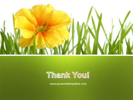 Yellow Flower In A Green Grass PowerPoint Template Slide 20