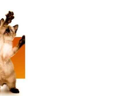 Kitten PowerPoint Template, Slide 3, 03459, Animals and Pets — PoweredTemplate.com
