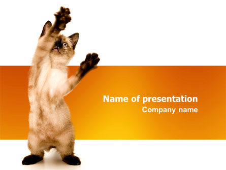 Animals and Pets: Kitten PowerPoint Template #03459