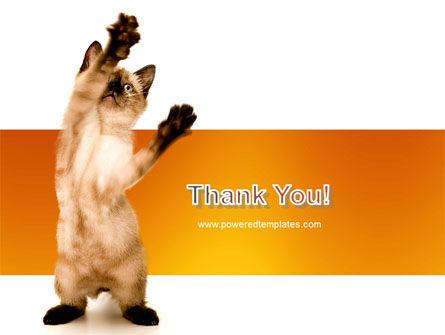 Kitten PowerPoint Template Slide 20