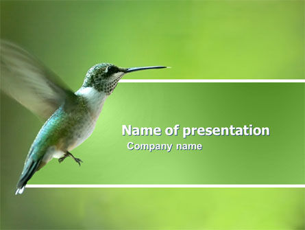Animals and Pets: Colibri PowerPoint Template #03555