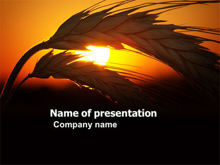 Spikelets PowerPoint Template, 03672, Agriculture — PoweredTemplate.com