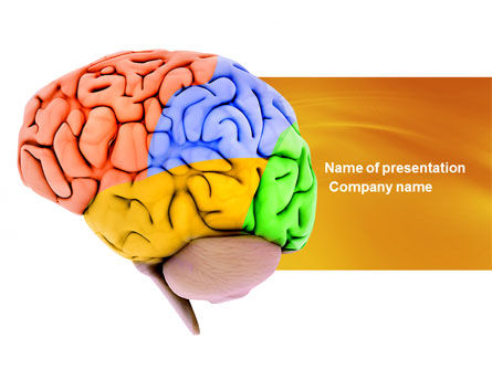 Cerebral Autoregulation PowerPoint Template, 03988, Medical — PoweredTemplate.com