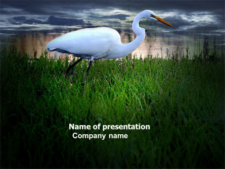 Nature & Environment: Egret PowerPoint Template #04024