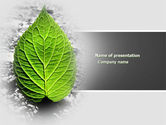Nature & Environment: Green Idea PowerPoint Template #04193