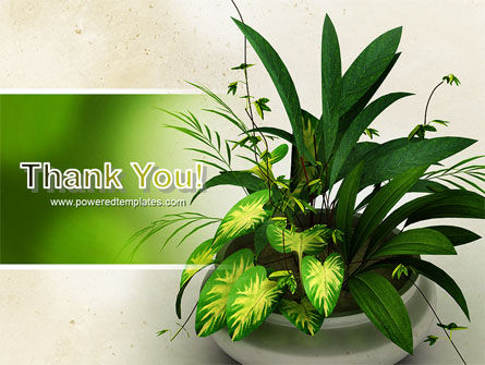 House Plant PowerPoint Template Slide 20