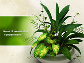 Nature & Environment: Modèle PowerPoint de plante d'appartement #04513
