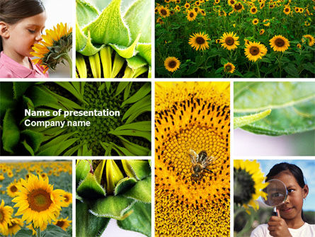 Education & Training: Sunflower Collage PowerPoint Template #04587