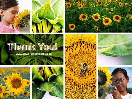 Sunflower Collage PowerPoint Template Slide 20