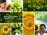 Education & Training: Sonnenblumencollage PowerPoint Vorlage #04587