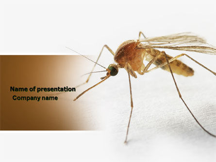 Animals and Pets: Mosquito PowerPoint Template #04599