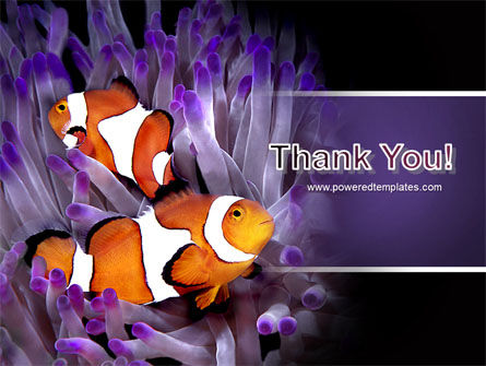 Clown Fish PowerPoint Template Slide 20