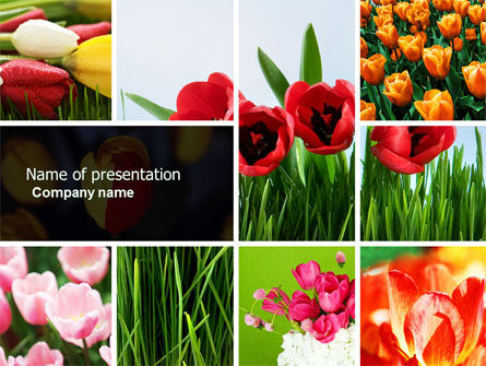 Nature & Environment: Tulips PowerPoint Template #04690