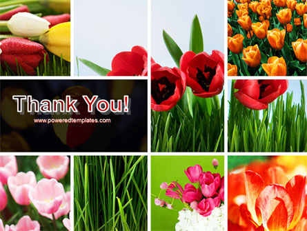 Tulips PowerPoint Template Slide 20