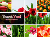 Tulips PowerPoint Template#20