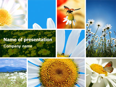 Nature & Environment: Camomile Field PowerPoint Template #04752