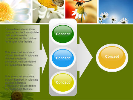 Camomile Field PowerPoint Template Slide 11