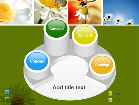 Camomile Field PowerPoint Template Slide 12