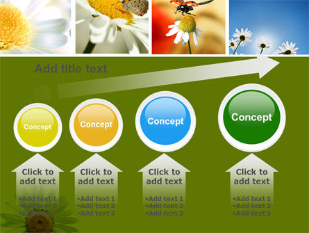 Camomile Field PowerPoint Template Slide 13