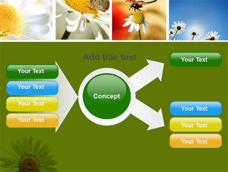 Camomile Field PowerPoint Template Slide 14