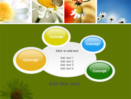 Camomile Field PowerPoint Template Slide 16