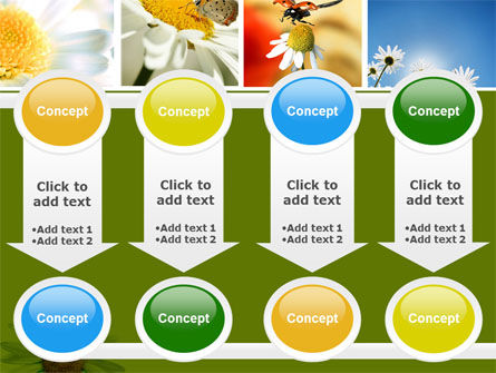 Camomile Field PowerPoint Template Slide 18