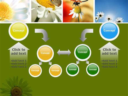 Camomile Field PowerPoint Template Slide 19