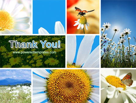 Camomile Field PowerPoint Template Slide 20