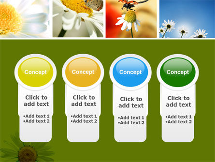 Camomile Field PowerPoint Template Slide 5