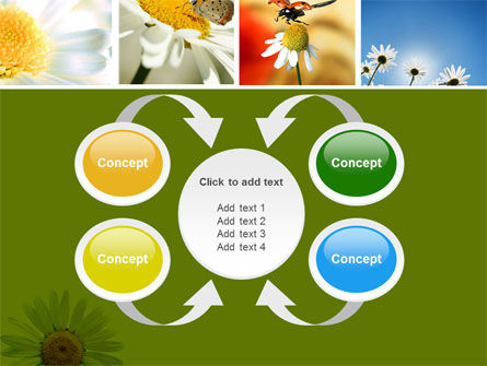 Camomile Field PowerPoint Template Slide 6