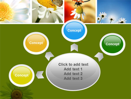 Camomile Field PowerPoint Template Slide 7
