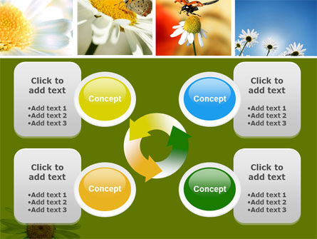 Camomile Field PowerPoint Template Slide 9