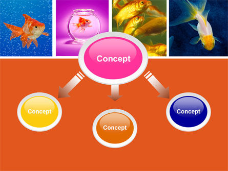 Various Goldfishes PowerPoint Template, Slide 4, 04762, Animals and Pets — PoweredTemplate.com