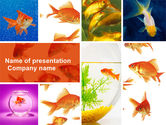 Animals and Pets: Modelo do PowerPoint - vários goldfishes #04762