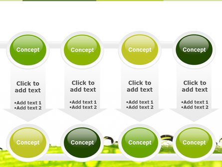 Dew PowerPoint Template Slide 18