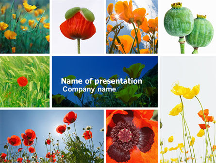 Nature & Environment: Modèle PowerPoint de coquelicot #04965