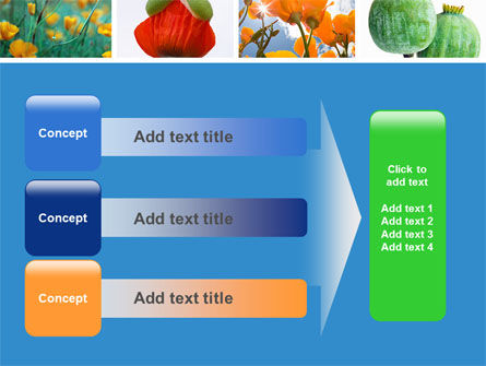 Poppy PowerPoint Template Slide 12