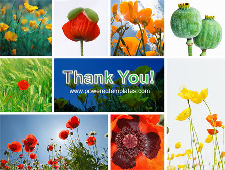 Poppy PowerPoint Template Slide 20