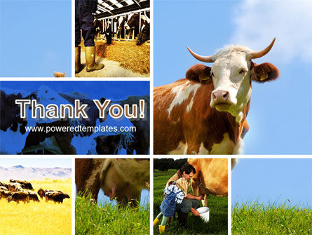 Cow PowerPoint Template Slide 20