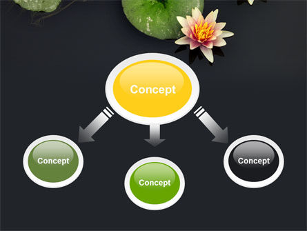 Water Lily PowerPoint Template, Slide 4, 05090, Nature & Environment — PoweredTemplate.com