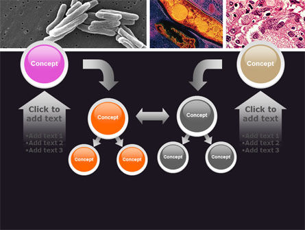 Tuberculosis PowerPoint Template Slide 19