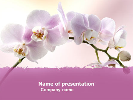 Nature & Environment: Orchid PowerPoint Template #05177