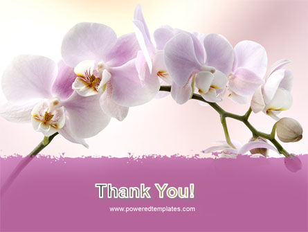 Orchid PowerPoint Template Slide 20
