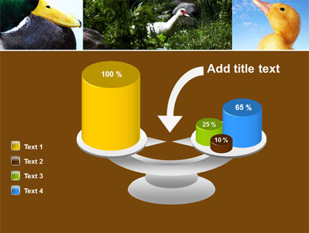 Duck PowerPoint Template Slide 10