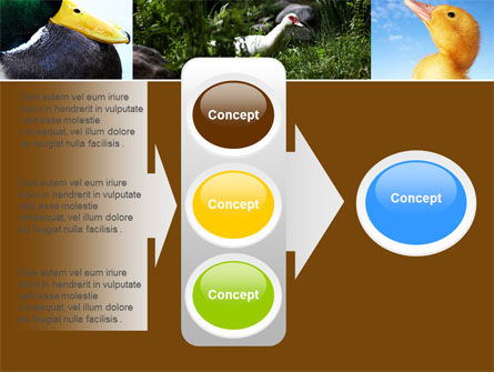 Duck PowerPoint Template Slide 11