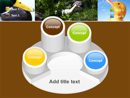 Duck PowerPoint Template Slide 12