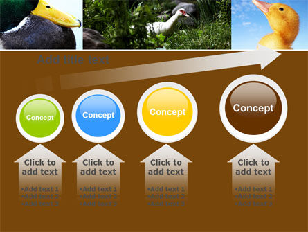 Duck PowerPoint Template Slide 13